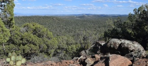 161 Acres in Shadow Rock Ranch, High Elevation, Trees, VIEWS, $127,500