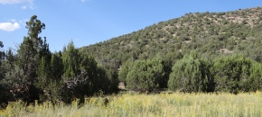 95-Acre Heavily Treed Mountaintop with Power, $89,500, Lot 1520