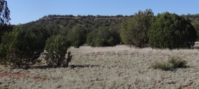 Lots of Meadows and great access on Lot 56, SRR